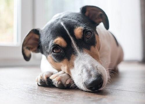 Give a sick dog antibiotics?
