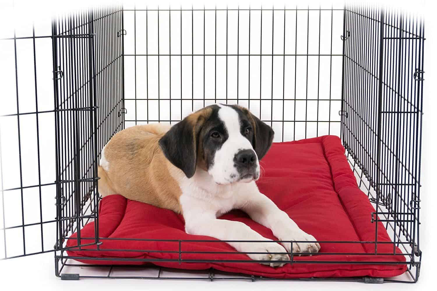 K9 Ballistics TUFF Bed for Dog Crates review