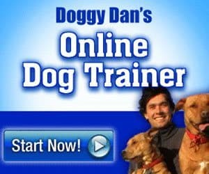 The Online Dog Trainer from Doggy Dan