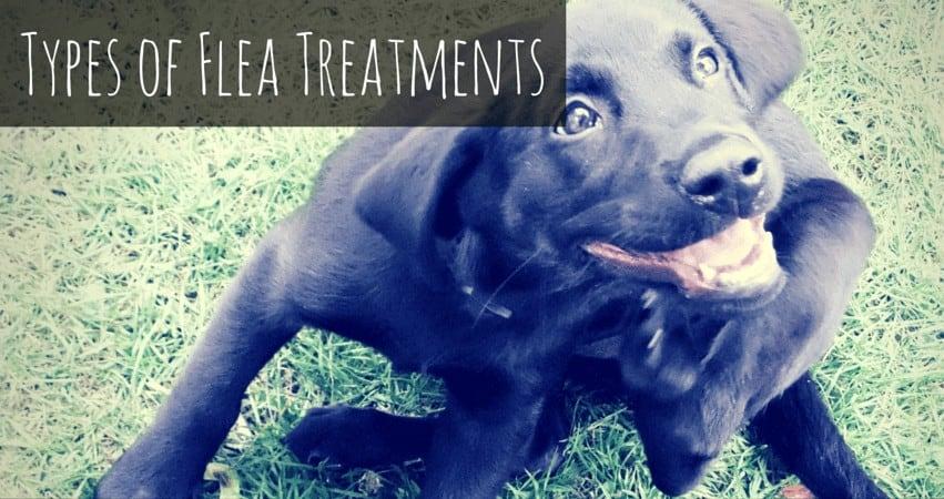 Types of Flea Treatments
