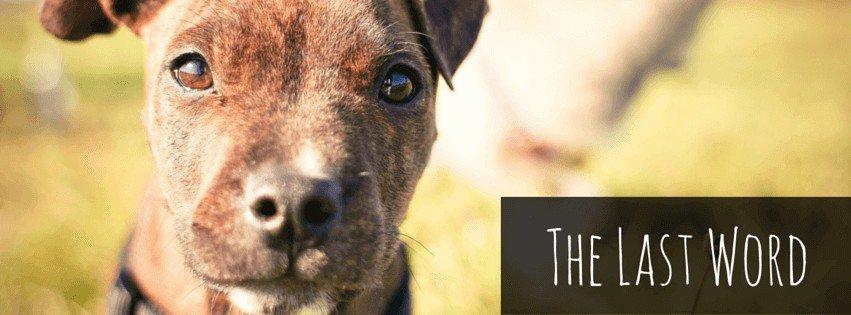 best flea meds for dogs