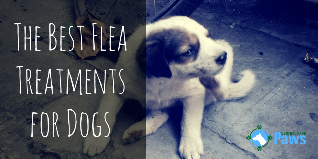Best Flea Treatments For Dogs Pills Drops Shampoos Sprays