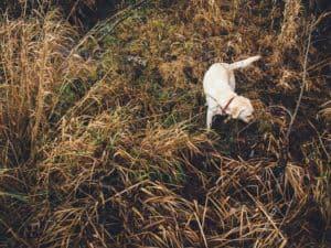 outdoor flea medicine for dogs