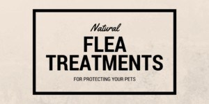 Natural flea treatments
