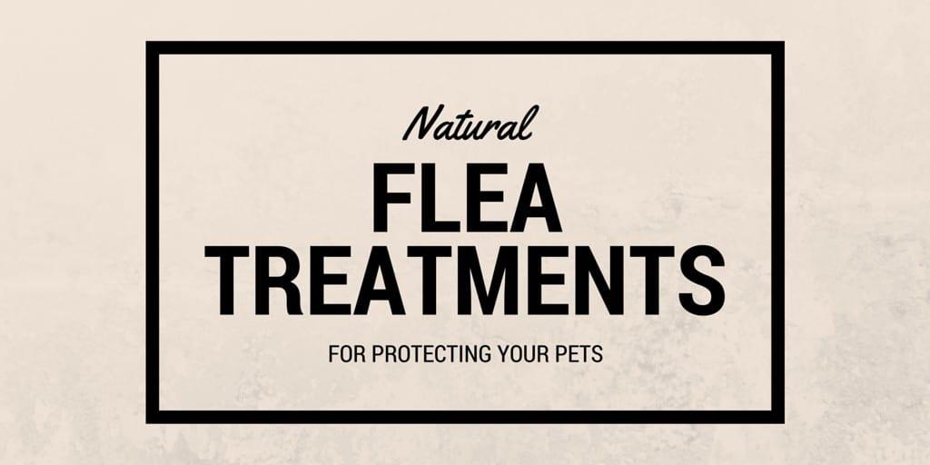Natural flea treatments