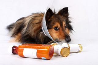 dog antibiotics