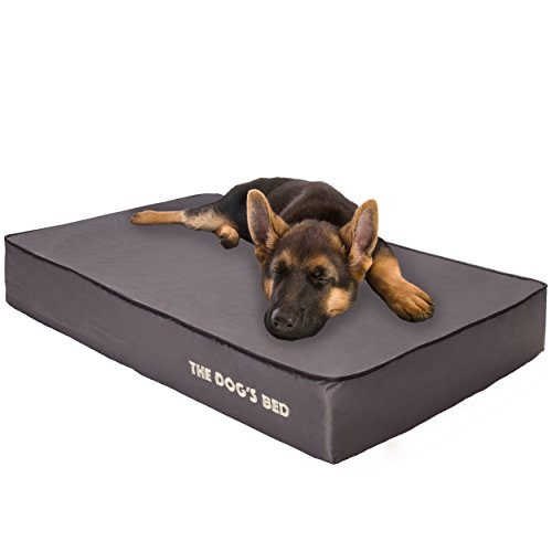 The Dog's Memory Bed orthopedic review