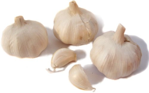 garlic for tapeworms