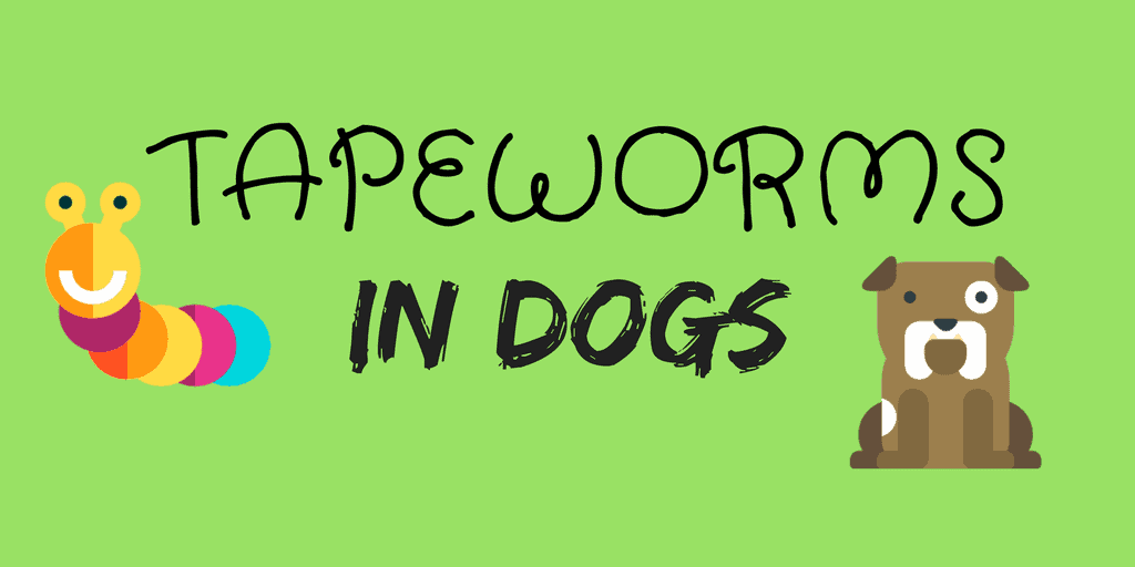 How to get rid of tapeworms in dogs