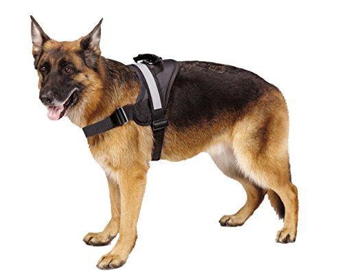 Standard Harness for leash training