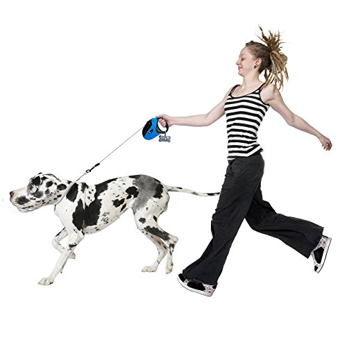 leash training your pup