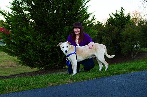 Easy Walk Harness to leash train a dog