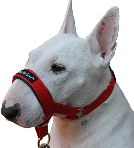 how to leash train a dog with a head halter harness