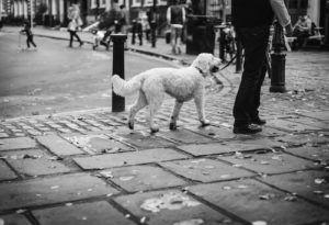 Dog Arthritis Treatments