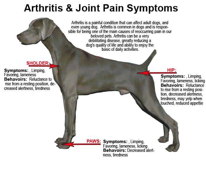 Symptoms of arthritis in dogs