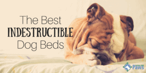 Best Indestructible Dog Beds