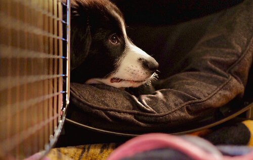 Crate training for puppy
