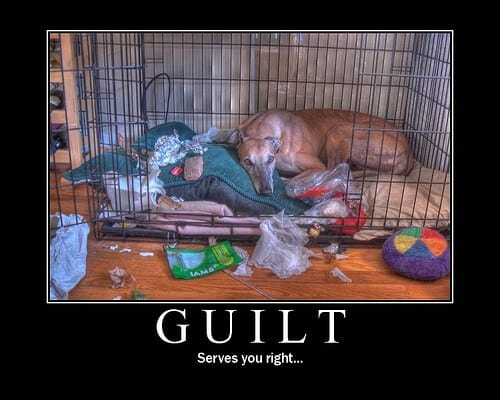 Dog chewing need crate training