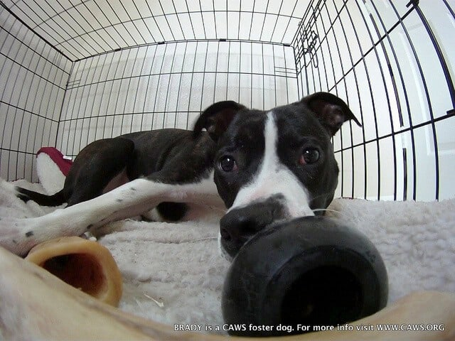 Dog with toys in crate