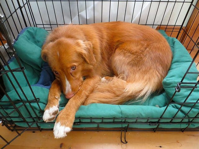 Is crate training good for dogs?