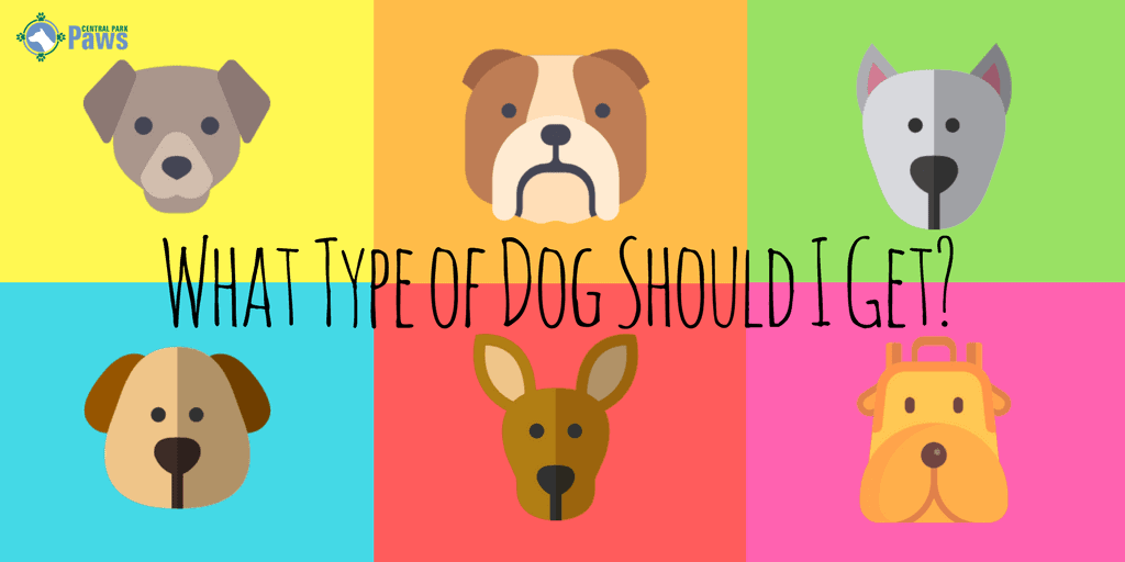 What Type of Dog Should I Get-