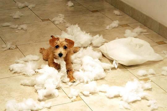 best indestructable dog beds