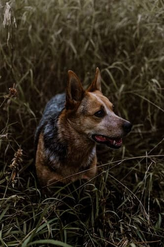 Is grass bad for dogs?