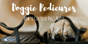 How to Cut a Dogs Nails That are Too Long
