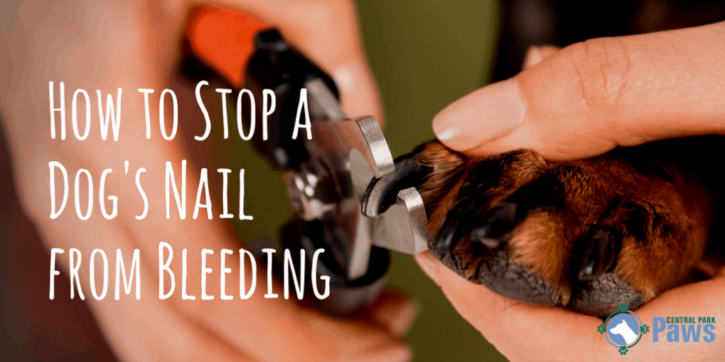 How To Stop A Dog\'s Nails From Bleeding While Trimming at Home