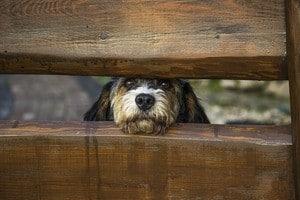neighbors barking dog at fence dog whistle training