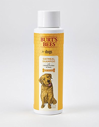 Shampoo for itchy dogs