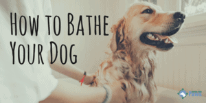 Can You Bathe a Dog with Dish Soap? How to Wash Your Dog