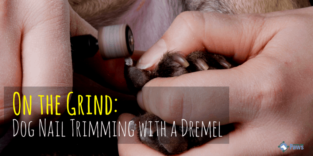 On the Grind: Dog Nail Trimming with a Dremel Tool