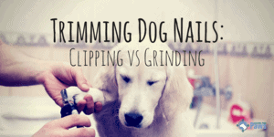 Trimming Dog Nails: Clipping vs Grinding