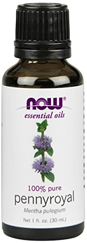 pennyroyal essential oil as a flea repellant