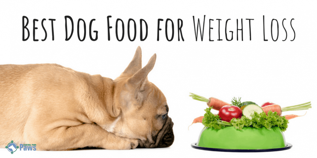 Got An Overweight Dog The Best Dog Foods For Weight Loss 2019