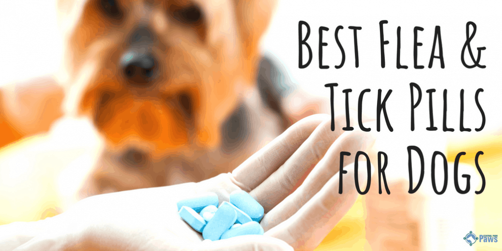 Best Flea and Tick Pills for Dogs