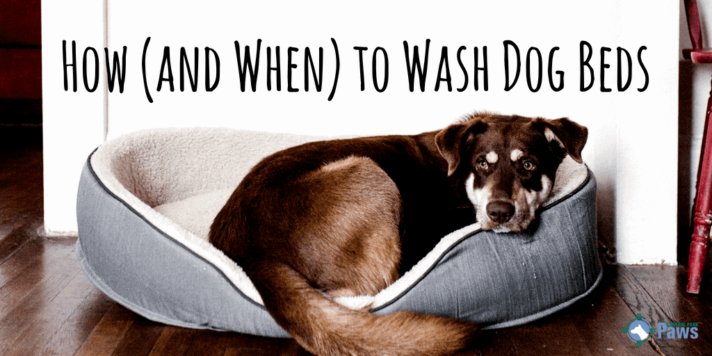 How (and When) to Wash Dog Beds