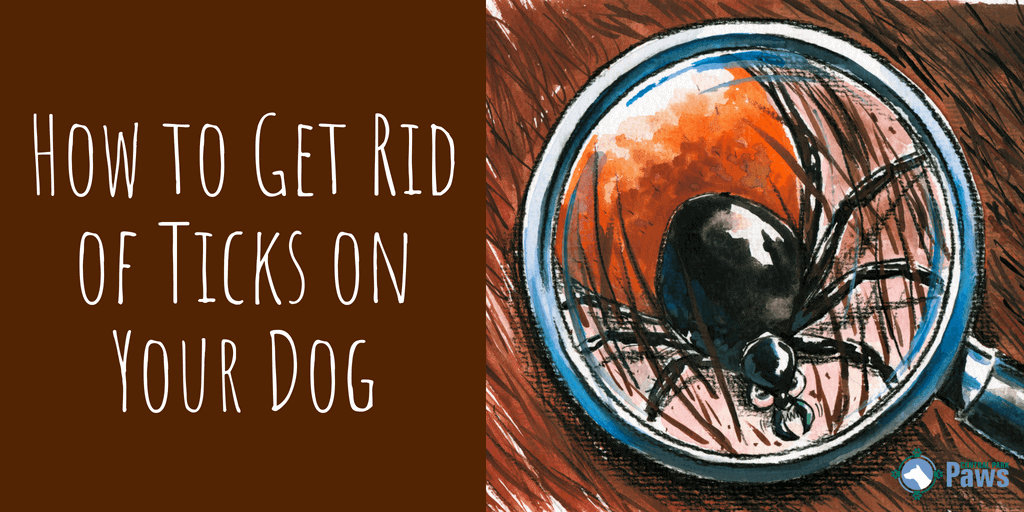 How to Get Rid of Ticks on Your Dog