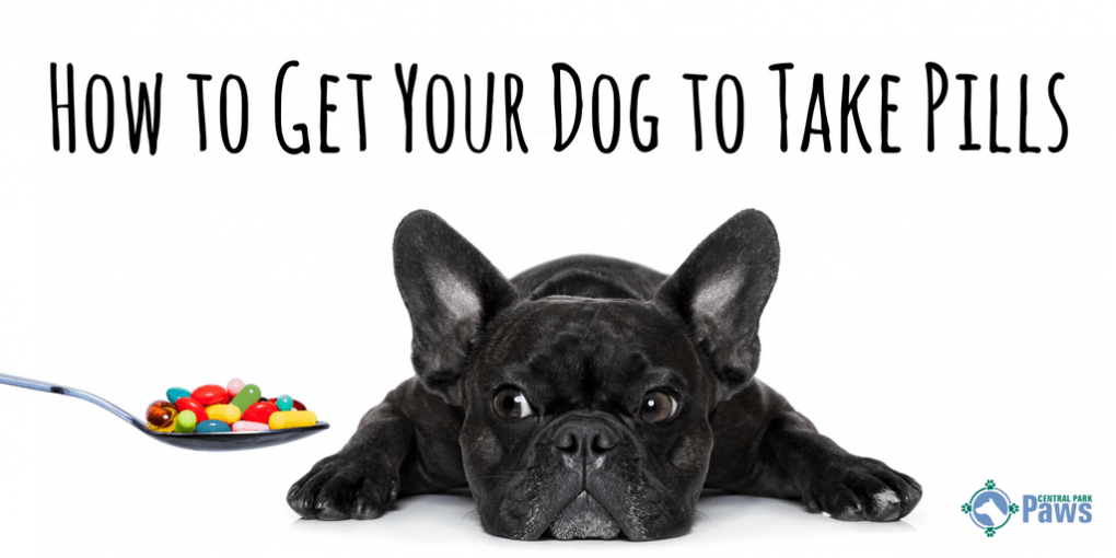 How to Get Your Dog to Take Pills