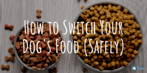 How to Switch Your Dog's Food (Safely)