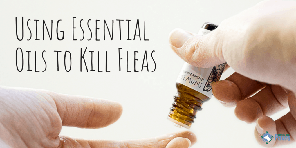 Essential Oils That Kill & Repel Fleas
