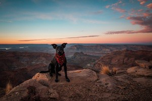 using essential oils to protect your dogs from fleas and ticks