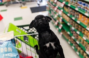 shopping with overweight dog