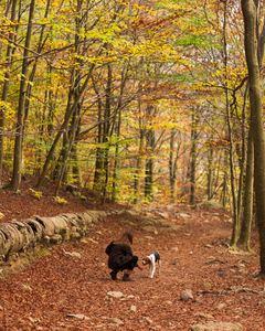 watch for ticks in woods when walking dogs