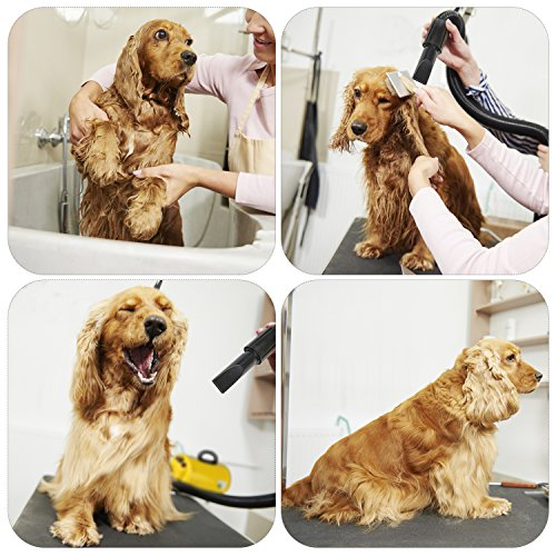 pet grooming system for bathing dogs