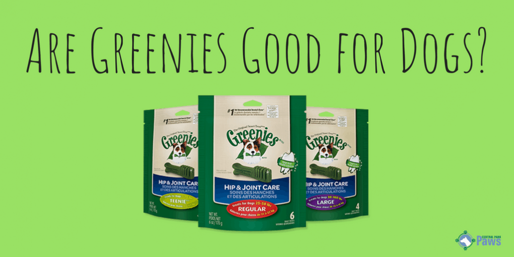Are Greenies Good or Bad for Dogs