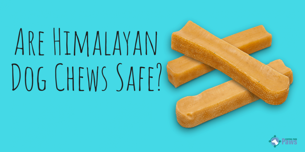 Are Himalayan Dog Chews Safe_