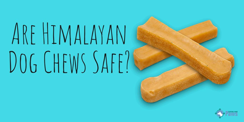 Are Himalayan Dog Chews Safe_