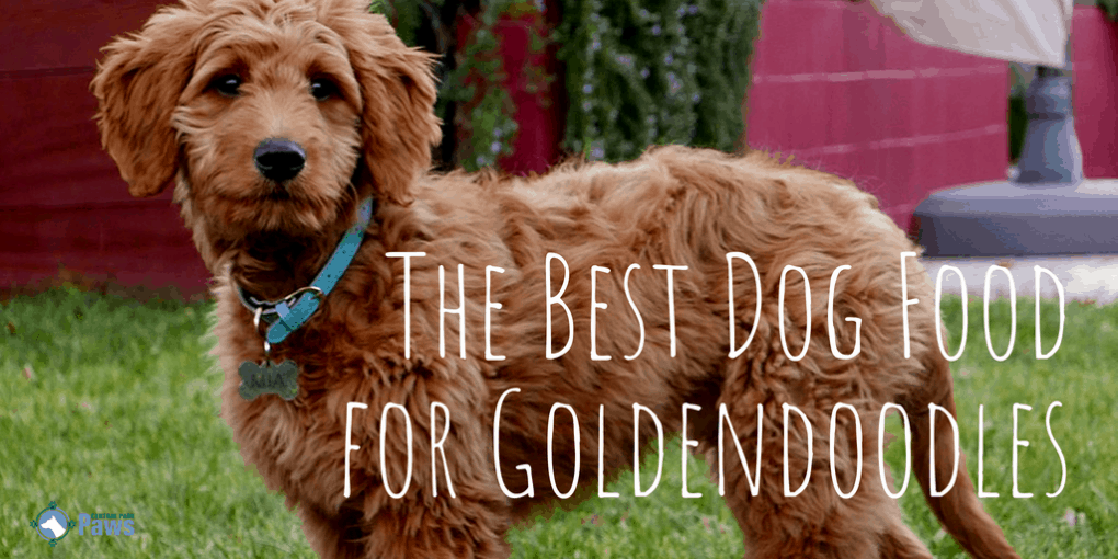 The Best Dog Food for Goldendoodles